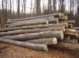 Firewood/Woodlogs Not Cleaved - Beech Firewood/Woodlogs Not Cleaved