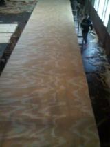 木皮供应网络 - 批发硬木木皮和热带木木皮 - 火炬松, 旋切