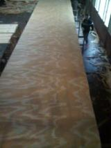 Rotary Cut Veneer For Sale - Rotary Cut Taeda Pine from Argentina