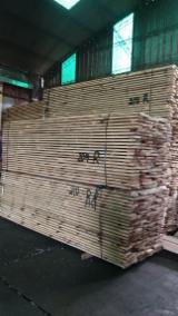 Furnierhandel - Laub Und Tropenholzfurnier - Paulownia