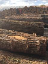 橡木, 耐磨层