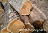 Teak Hardwood Logs - Teak Logs For Sale, diameter 28+ cm