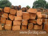 Buy Or Sell Hardwood Square Logs - Oak / Doussie / Kosso Square Logs 80+ cm
