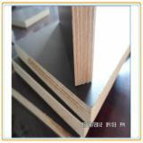 Buy or Sell Marine Plywood - Birch / Pine Marine Plywood
