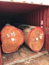 Doussie Hardwood Logs - Doussie Logs 20+ cm