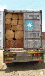 Square Logs - Tali Square Logs 35+ cm