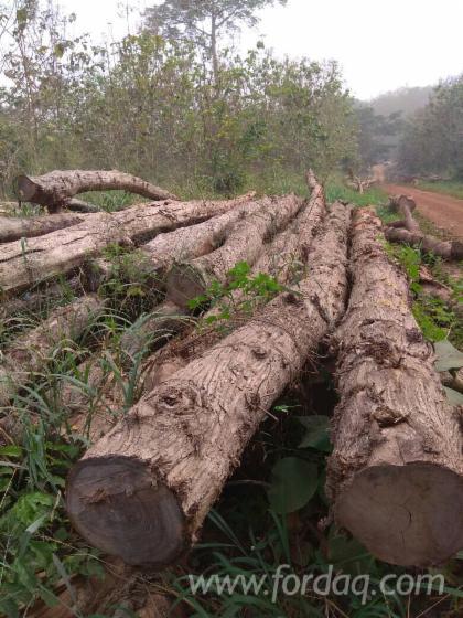 Teak-Saw-Logs