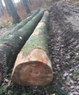 Beech  Hardwood Logs - PEFC/FFC 30+ cm Beech Saw Logs from France, Alsace