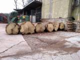 Forest and Logs - 500+ mm Oak Veneer Logs Italy
