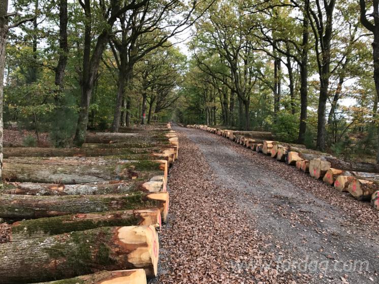 Cumpar-Bustean-De-Gater-Stejar