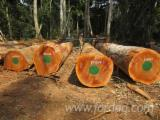 Sapelli Hardwood Logs - Sapelli Logs 50+ cm