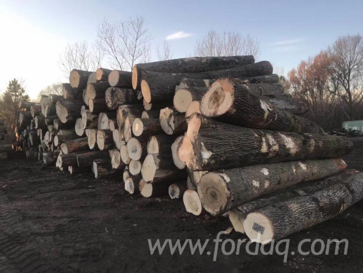 Ash-Logs-2SC