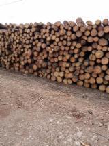 森林和原木 北美洲  - 锯材级原木, 湿地松