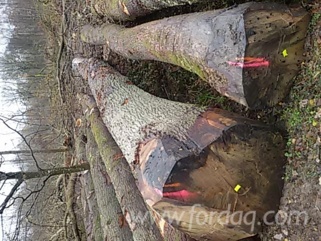 Oak-Saw-Logs-40
