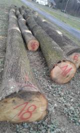 Poland Hardwood Logs - Oak Logs 30-80 cm