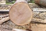 Hardwood Logs importers and buyers - Buying Oak Logs 30+ cm