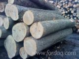 Forest And Logs Vietnam - White Ash Logs 30+ cm