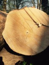 Hardwood Logs importers and buyers - Maple / Oak Logs 30 cm