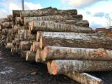 Latvia Supplies - Birch Veneer Logs 24+ cm