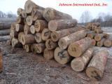 森林和原木 北美洲  - 单板级原木, 白橡木