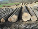 森林和原木 亚洲  - 锯材级原木, 白色灰