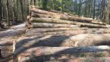 Hardwood Logs importers and buyers - Maple Veneer Logs 30 cm