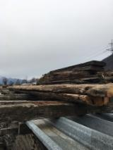Softwood  Sawn Timber - Lumber For Sale - Larch / Fir / Chestnut Old Beams