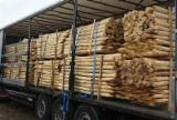 硬木:原木 轉讓 - 木桩, 刺槐, 森林管理委员会