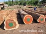Hardwood Logs importers and buyers - Iroko Logs 50+ cm