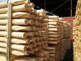 原木待售 - 上Fordaq寻找最好的木材原木 - 木桩, 苏格兰松, 森林管理委员会