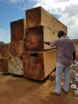 Kiaat Hardwood Logs - Ricardo