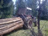Servicii Forestiere Publicati oferta - Servicii de exploatare forestiera - 50 lei, negociabil