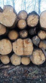 捷克 - Fordaq 在线 市場 - 锯材级原木, 云杉-白色木材