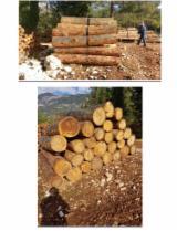 Nadelrundholz - Schnittholzstämme, Libanon Zeder
