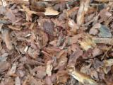 Firewood, Pellets And Residues - Pine Bark