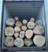 Forest And Logs For Sale - Gmelina Logs 90+ cm