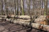 Forest And Logs For Sale - Oak Saw Logs 400 mm