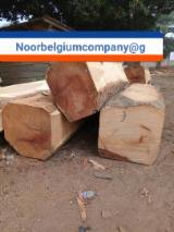 森林和原木 非洲  - 锯材级原木, 缅茄(苏)木