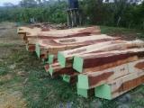 森林和原木 北美洲  - 方形木材, 黄檀木