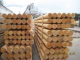 Bosques Y Troncos Europa - Venta Postes Pino Silvestre  - Madera Roja, Abeto  - Madera Blanca FSC Bielorrusia