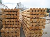 Troncos De Madera Aserrada En Venta - Fordaq - Venta Postes Pino Silvestre  - Madera Roja, Abeto  - Madera Blanca FSC Bielorrusia