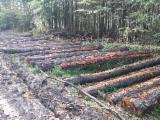 硬木原木  - Fordaq 在线 市場 - 锯材级原木, 常见的黑桤