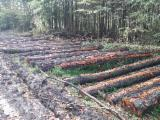 Bosques Y Troncos Europa - Venta Troncos Para Aserrar Aliso Negro Común Holanda Niederlande