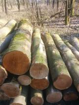 Hardwood  Logs For Sale - Maple Industrial Logs