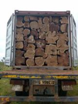 Ghana - Fordaq Online market - Rosewood / Tali / Paopao Logs 30+ cm