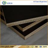 Veneer and Panels - 18 mm Poplar Film Faced Marine Plywood For Formwork