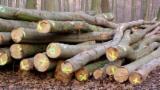 Grumes Pour Bois De Chauffage - Vend Grumes Pour Bois De Chauffage  Hêtre Bayerischer Wald