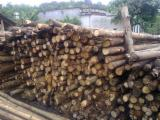 Hardwood  Logs For Sale - Eco friendly and cheap rubber wood timber