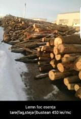 Firewood, Pellets And Residues - Beech, Oak Firewood/Woodlogs Not Cleaved