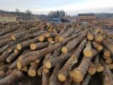 硬木木材 - 注册查看最好的木制品 - 毛边材-圆木剁, 土耳其橡木cerris